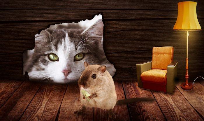 Katz Und Maus Spiel Online